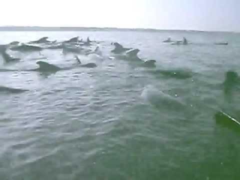 Mass Pilot Whale Stranding Ten Years Ago on Cape Cod