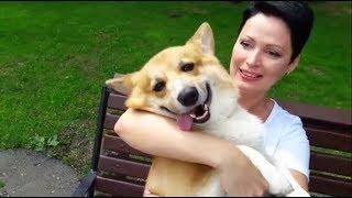 «Борис, разреши жене купить собаку»: история корги, который появился в семье по просьбе Путина