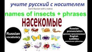 № 208   Учим русский язык : НАЗВАНИЯ НАСЕКОМЫХ
