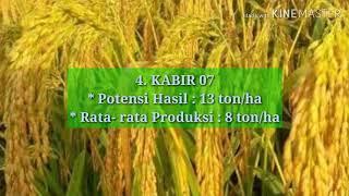 Download lagu 10 Jenis Padi Unggul Terbaru Tahun ini yang WAJIB DICOBA para petani di Indonesia