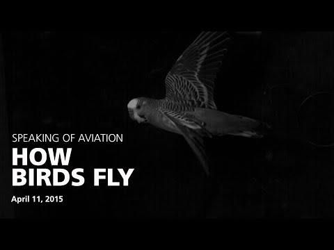 How Birds Fly with Dr. Peter Cavanagh
