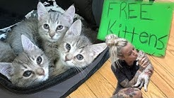 Free Kittens?!