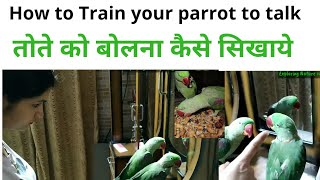 How to Train your parrot to talk | conversation with my parrot | parrot ko bolna sekhana