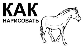 Лошадь рисунок карандашом. КАК НАРИСОВАТЬ ЛОШАДЬ поэтапно(Как нарисовать лошадь поэтапно карандашом для начинающих за короткий промежуток времени. http://youtu.be/ZP-6HNvBmqo..., 2015-06-22T08:42:05.000Z)