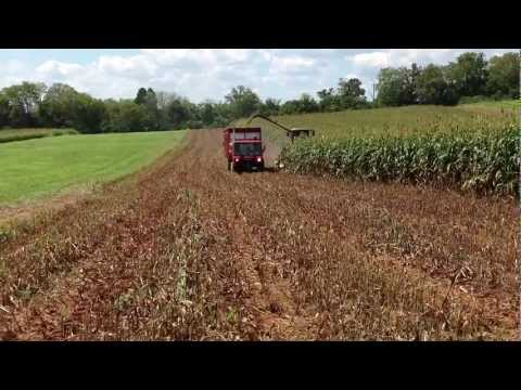 Chopping BMR Forage Sorghum