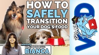 How To Safely Transition Your Dog's Food | Big Al's