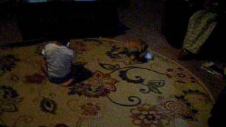 Dog Gets Potty Trained With A Baby Diaper Lol!