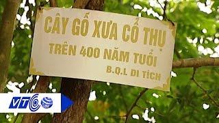 Người dân phản đối 'hạ giá' cây sưa 49 tỷ | VTC
