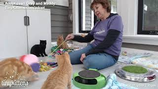 Stanlily playing! 1/17 - TinyKittens.com thumbnail