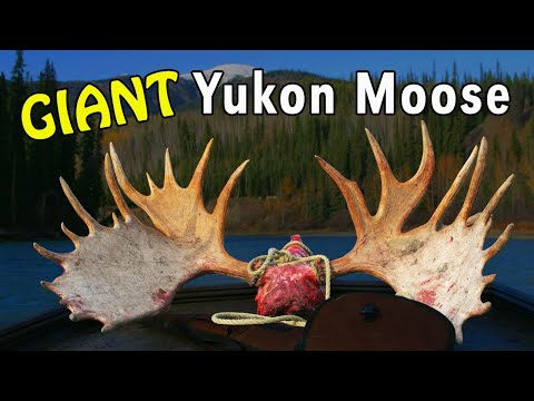 Yukon MOOSE Hunting BY BOAT! With Mike Eastman (Eastmans' Hunting TV)