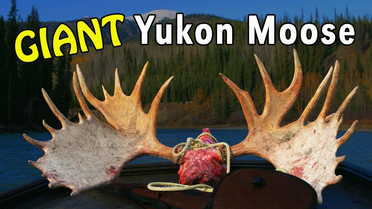 Moose hunting the yukon with mike eastman youtube solutioingenieria Gallery