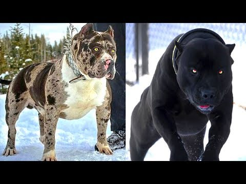 10 SCARIEST DOGS EVER!!!
