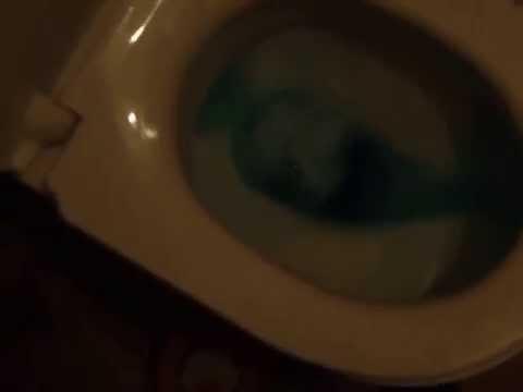 скачатьы порно в туалете ресторана