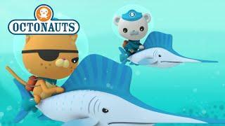 Octonauts: Big Adventures