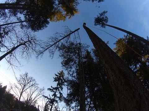 Solo Tree Work