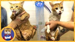 ЛАЙФХАК - как правильно и безопасно для жизни искупать кота