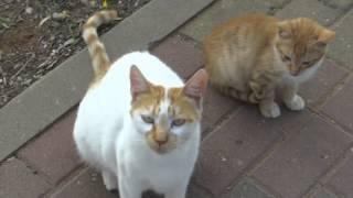 Уличные израильские кошки!!!Кирьят-Ям.Израиль.