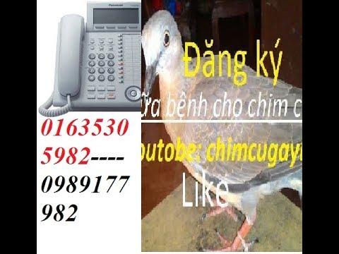 Bán chim cu gáy toàn quốc cơ sở bán giống  các loại 01635305982