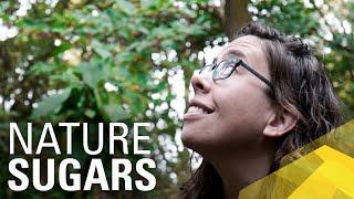 Breaking Down Autumn - Engineering Nature's Sugars