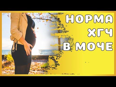 Уровень ХГЧ во время беременности