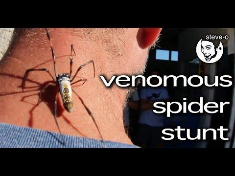 Venomous Spider Stunt