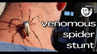 Venomous Spider Stunt - Steve-O