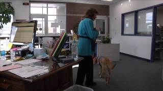 Becklyn The Therapy Dog Of Newcastle Middle School