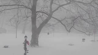 Blizzard on Long Island - Suffolk County - January 4, 2018 - 9:50 AM