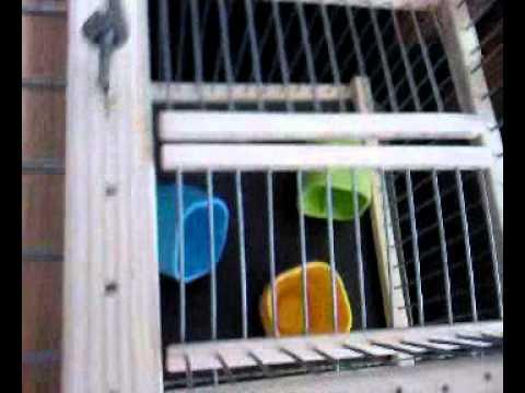 Cage Piège à Trébuchet (Attrape Oiseaux Vivants sans bl