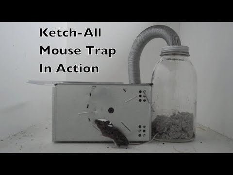 """Advertised As """"The World's Best Automatic Mouse Trap"""" Ketch-All Mouse Trap In Action"""