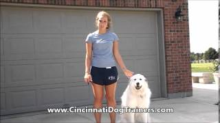 Great White Pyrenees Vesper's Testimonial For Cincinnati Dog Trainers Off Leash K9