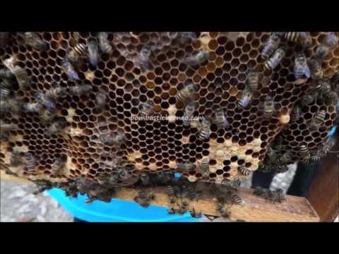 Kampung Madu Gombizau, Honey Bee Farm, Sabah Malaysia