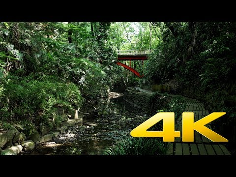 Todoroki Valley, Tokyo's small jungle - Tokyo - 等々力渓谷 - 4K Ultra HD