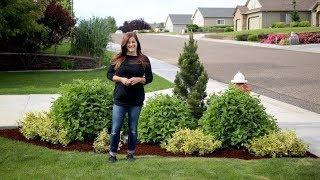 Landscape Makeover--Two Years Later