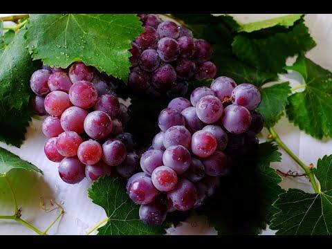 دراسة تكشف العنب يكافح سرطان البنكرياس  - نشر قبل 18 ساعة