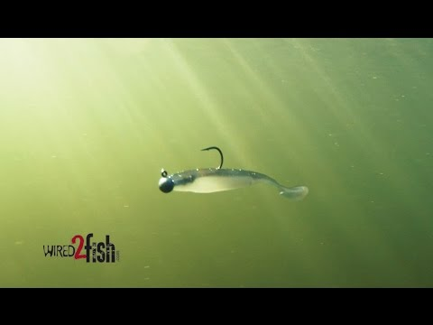 Target Spotted Bass With Finesse Swimbaits