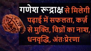 Ganesh Rudraksh benefits, price, गणेश रुद्राक्ष के फायदे, पहचान, मंत्र, लाभ, धारण विधि, ऋद्धिसिद्धि