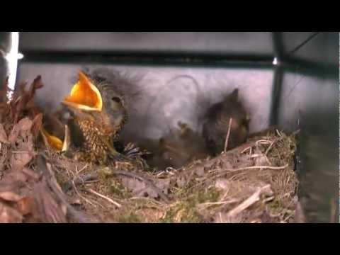 junger vogel aus dem nest gefallen doovi. Black Bedroom Furniture Sets. Home Design Ideas