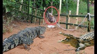Creative Man Make Best Crocodile Trap Technology - Big Crocodile Trap Using Chicken That Work 100%