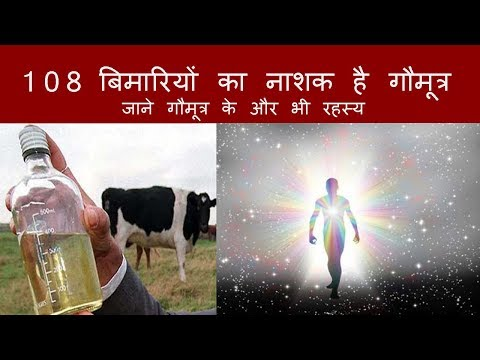 जाने सुबह खाली पेट गोमूत्र पीने से हमारे शरीर में होता है क्या Cow Urine Treatment of all diseases
