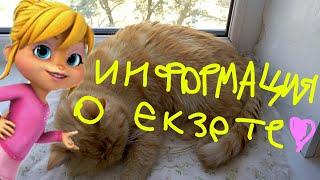 Информация о экзоте (кошке) Эле