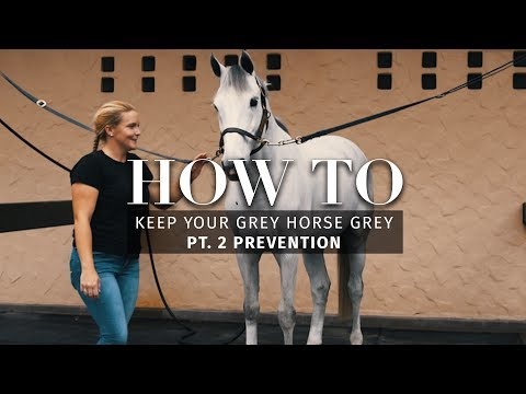 How to: Keep your grey horse grey pt. 2 Prevention