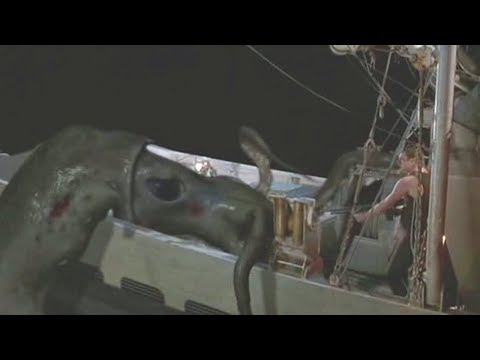 """扒界:3分钟看《北海巨妖》,原来北欧神话中的""""妖兽""""就是这样子滴"""