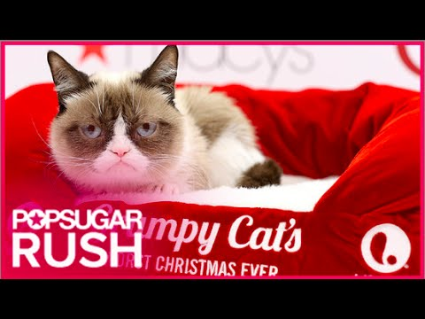 Grumpy Cat's Worst Christmas Ever Movie P