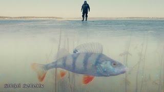 Зимняя рыбалка Поклевка окуня на жерлицу(Поклевка окуня на жерлицу. Зимняя рыбалка Рыбалка 2016-2017 с подводной камерой. Ловля окуня на жерлицы. Подводн..., 2016-12-07T13:09:47.000Z)