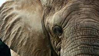 Самое сильное животное в мире.