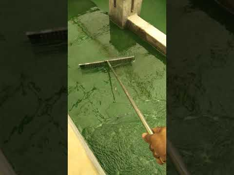 Spirulina cultivation By RP Natural Kolhapur 9960713838.