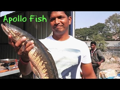 How To Cook Boneless Fish – Battered Fish Recipe – Simple Fish Recipes For Two – Apollo Fish indian