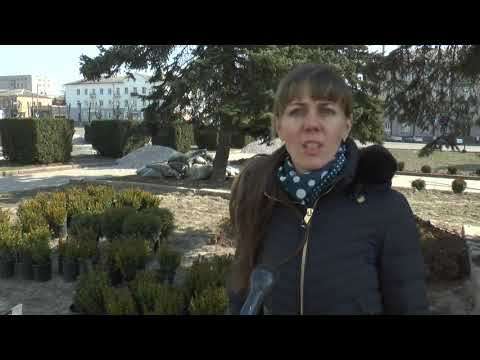 KorostenTV: KorostenTV_02-04-20_КВГП висаджує зелені насадження