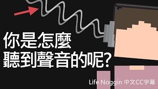 life noggin 你是怎麼聽到聲音的呢 中文cc字幕